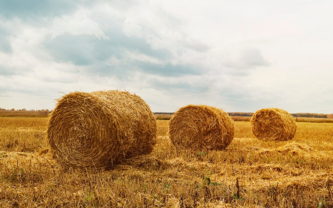 Finding the Needles in the Haystack